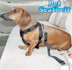 $11.99 for a Pet Car Seat Belt from Afreya ($25.00 Value)